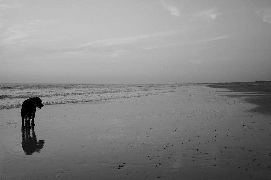 """""""Der alte Hund und das Meer """""""