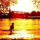 Der alte Hund und der Fluß