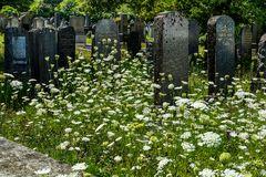 Der alte jüdische Friedhof 08