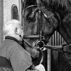 Der alte Mann und das Pferd