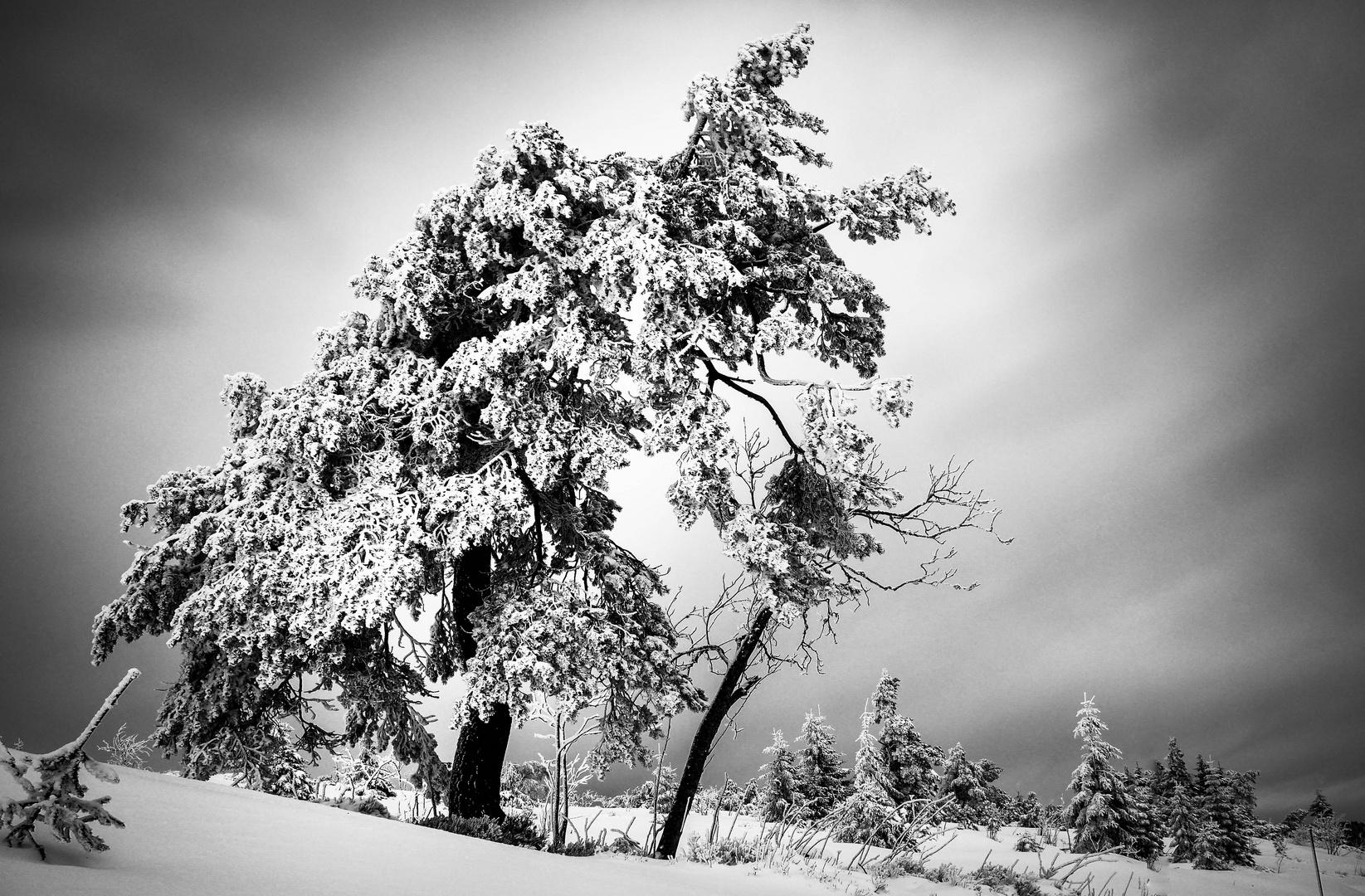 Der Alte Mann und der Schnee