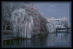 Der alte Neckar bei Heilbronn