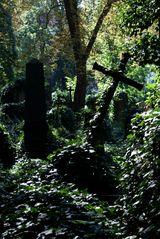 """der """"Alte"""" Prager Friedhof"""