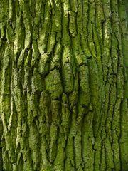 Der Alte vom Walde