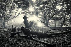 Der alte Wald 3