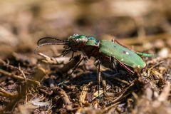 Der Ameisenschreck