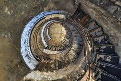 der ammonit