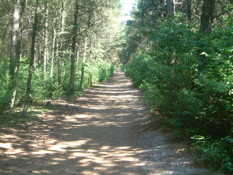Der Amrumer Wald
