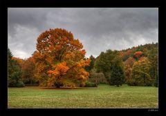 Der andere Herbst - 3