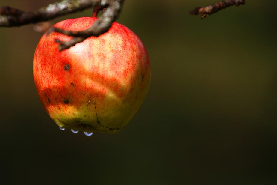 Der Apfel...........