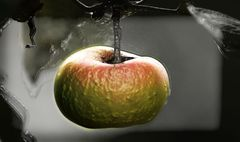 Der Apfel fällt nicht weit vom...
