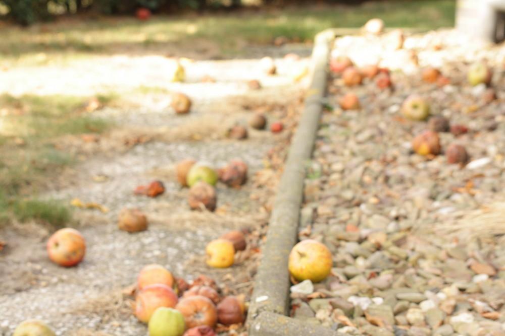 Der Apfel fält nicht weit vom Baum