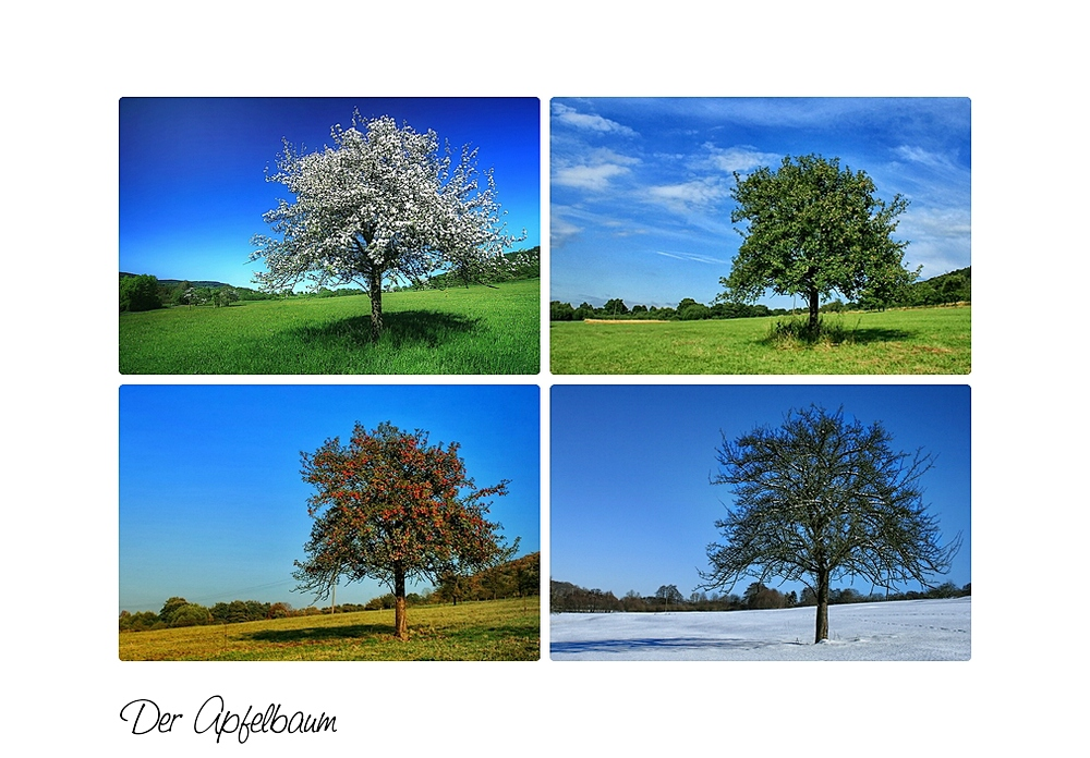 Der Apfelbaum Im Wandel Der Jahreszeiten Foto Bild Jahreszeiten
