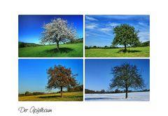 -Der Apfelbaum im Wandel der Jahreszeiten-
