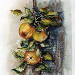 Der Apfelzweig...