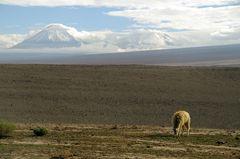 Der Atacama Klassiker ;-)