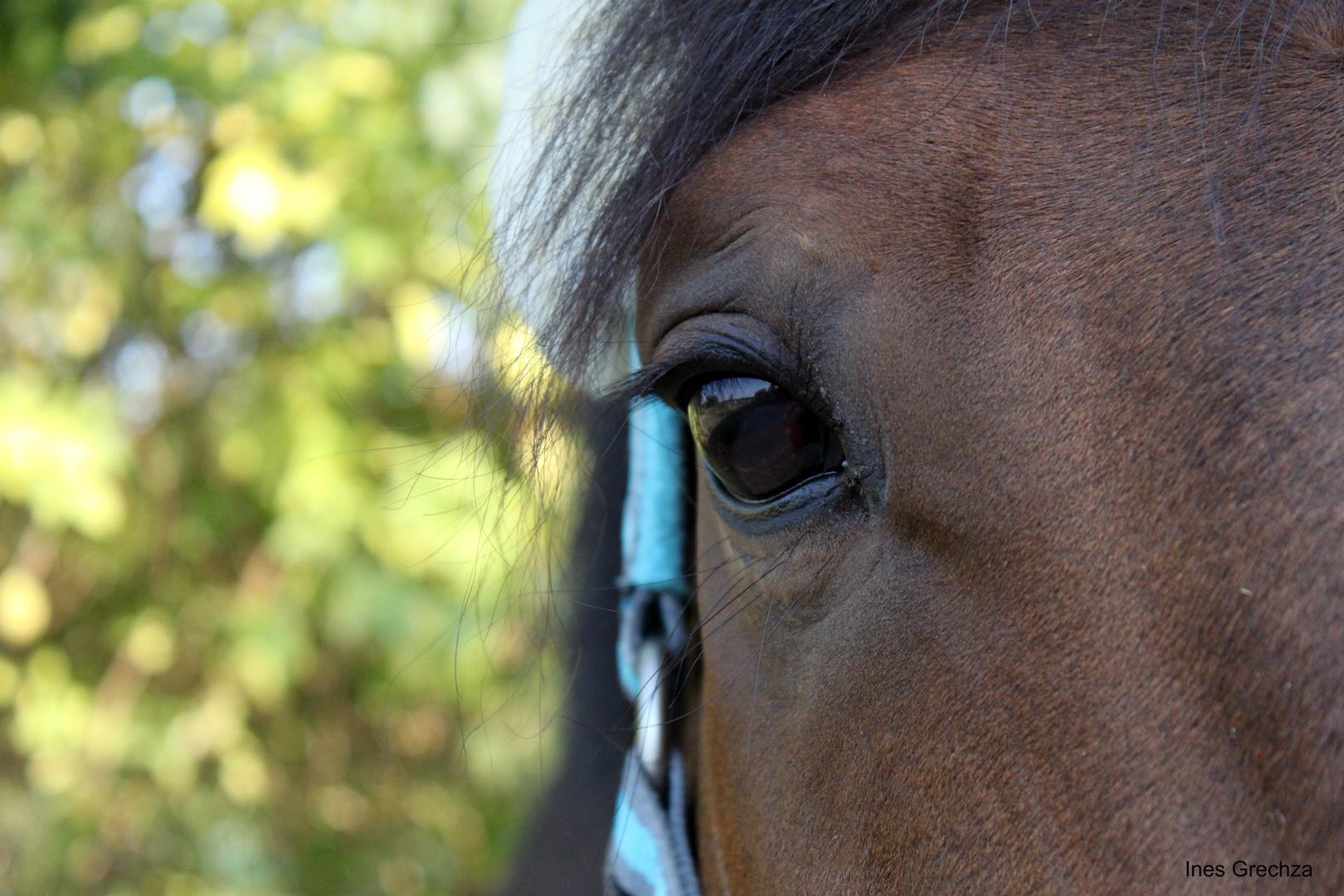 Der Ausdruck eines Pferdes