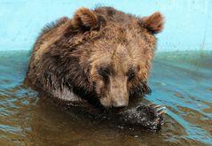 der Bär im Bade