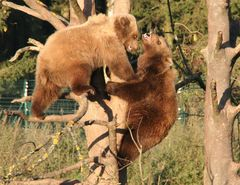 Der Bärenkuss