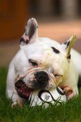 der Ball gehört mir