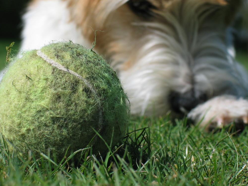 Der Ball und Cora