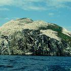 Der Bass Rock, Heimat des Basstölpels