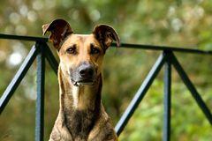 Der Bastionshund