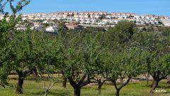 Der Bauboom in Spanien und seine Auswüchse II