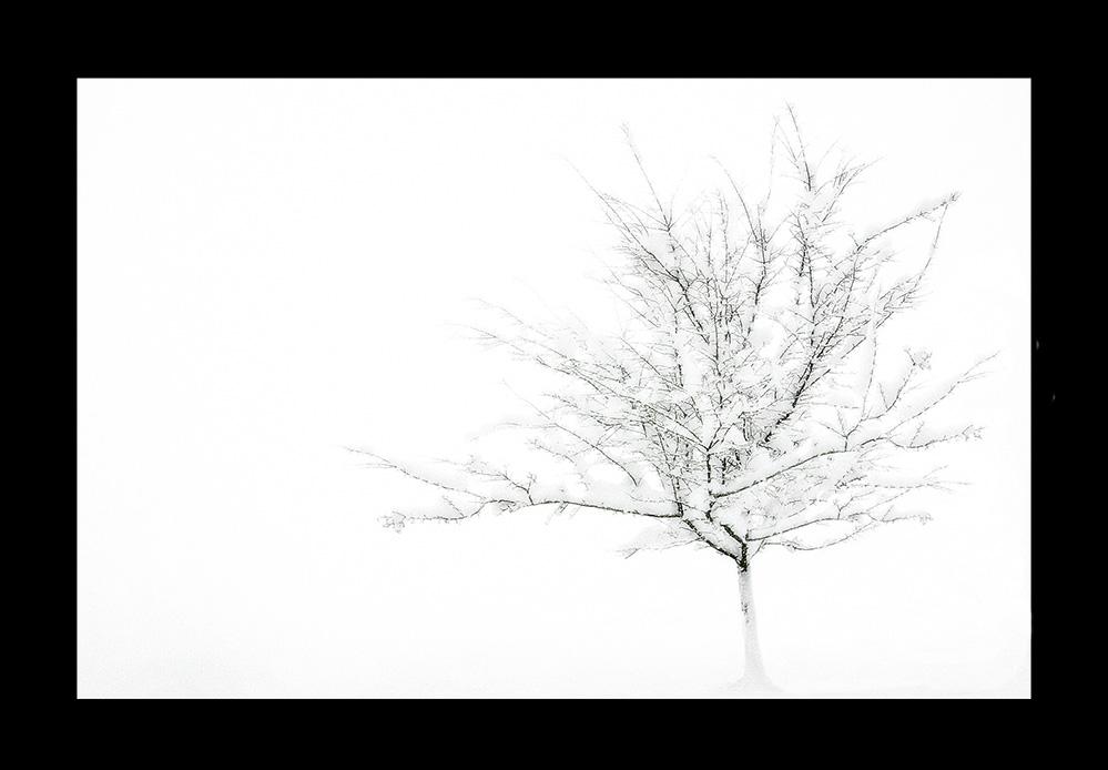 :::...der Baum...:::