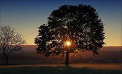 * Der Baum *