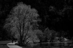 Der Baum am Leinpfad