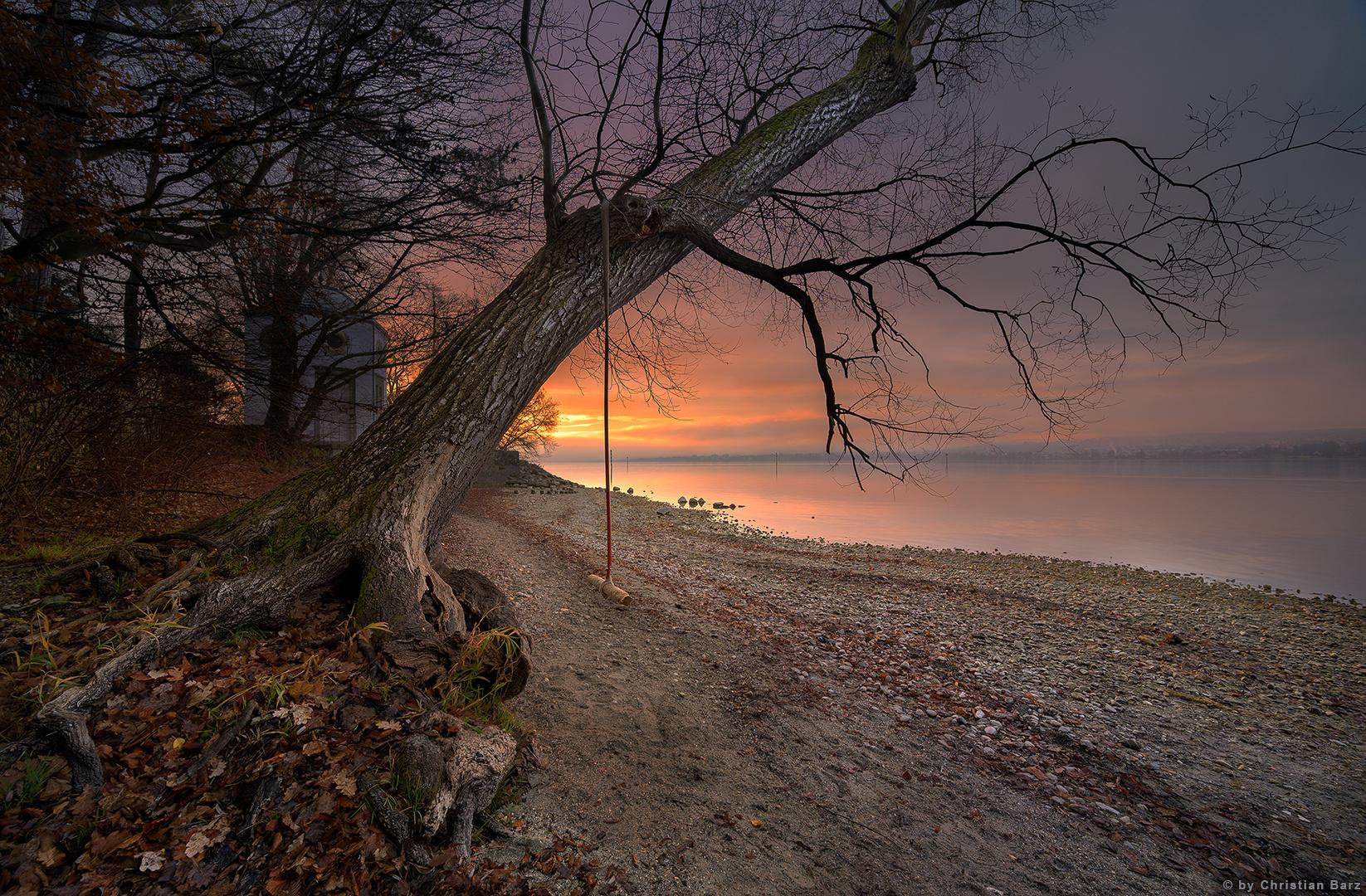 der Baum am See