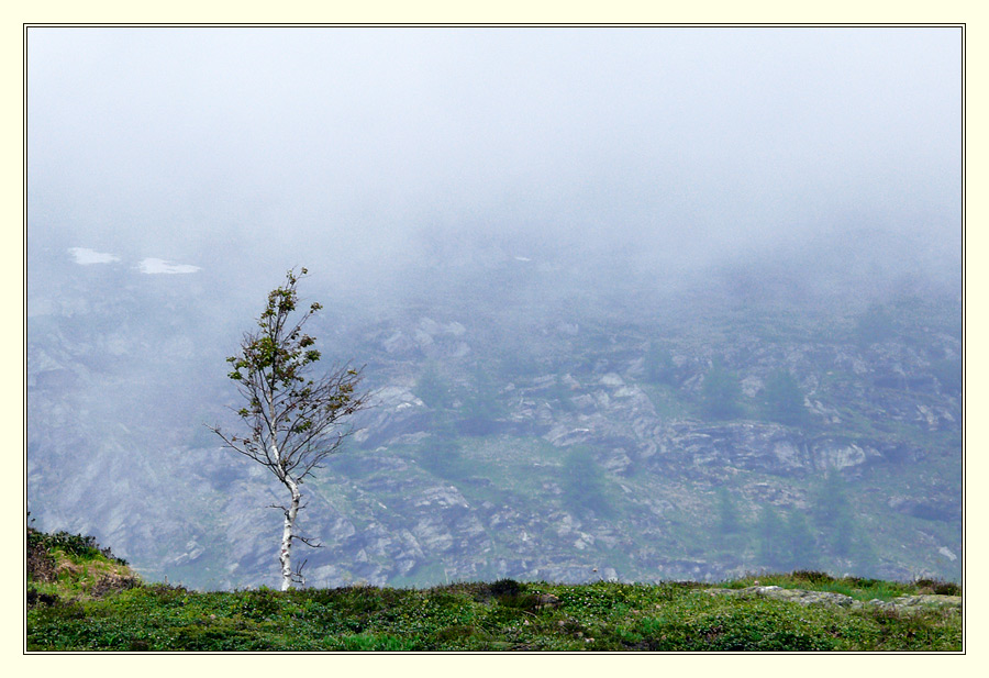 der Baum am St. Gotthard