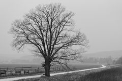 der Baum am Weg