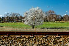 Der Baum an der Bahn