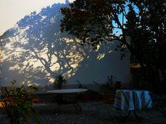 Der Baum an der Wand