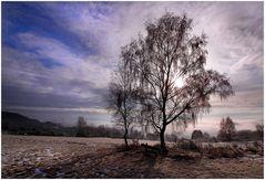 ---Der Baum---