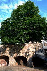 Der Baum, der durch die Mauer wächst...