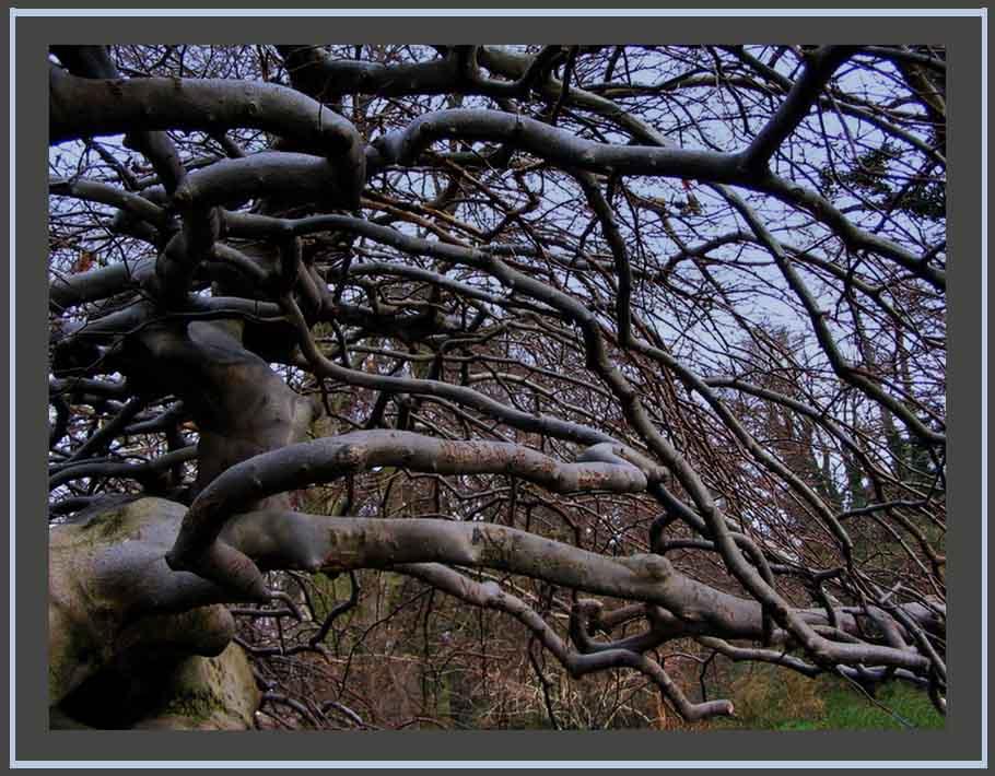 Der Baum der Elfe