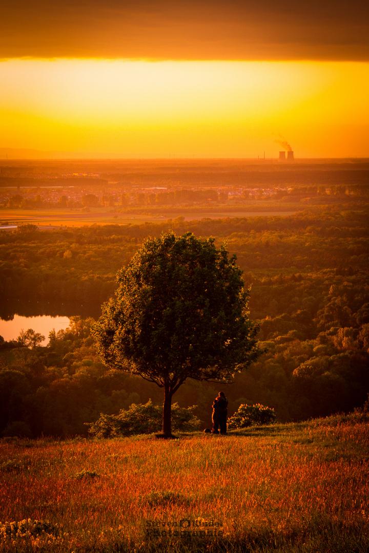Der Baum der verliebten