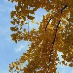 Der Baum des Jahrtausends....