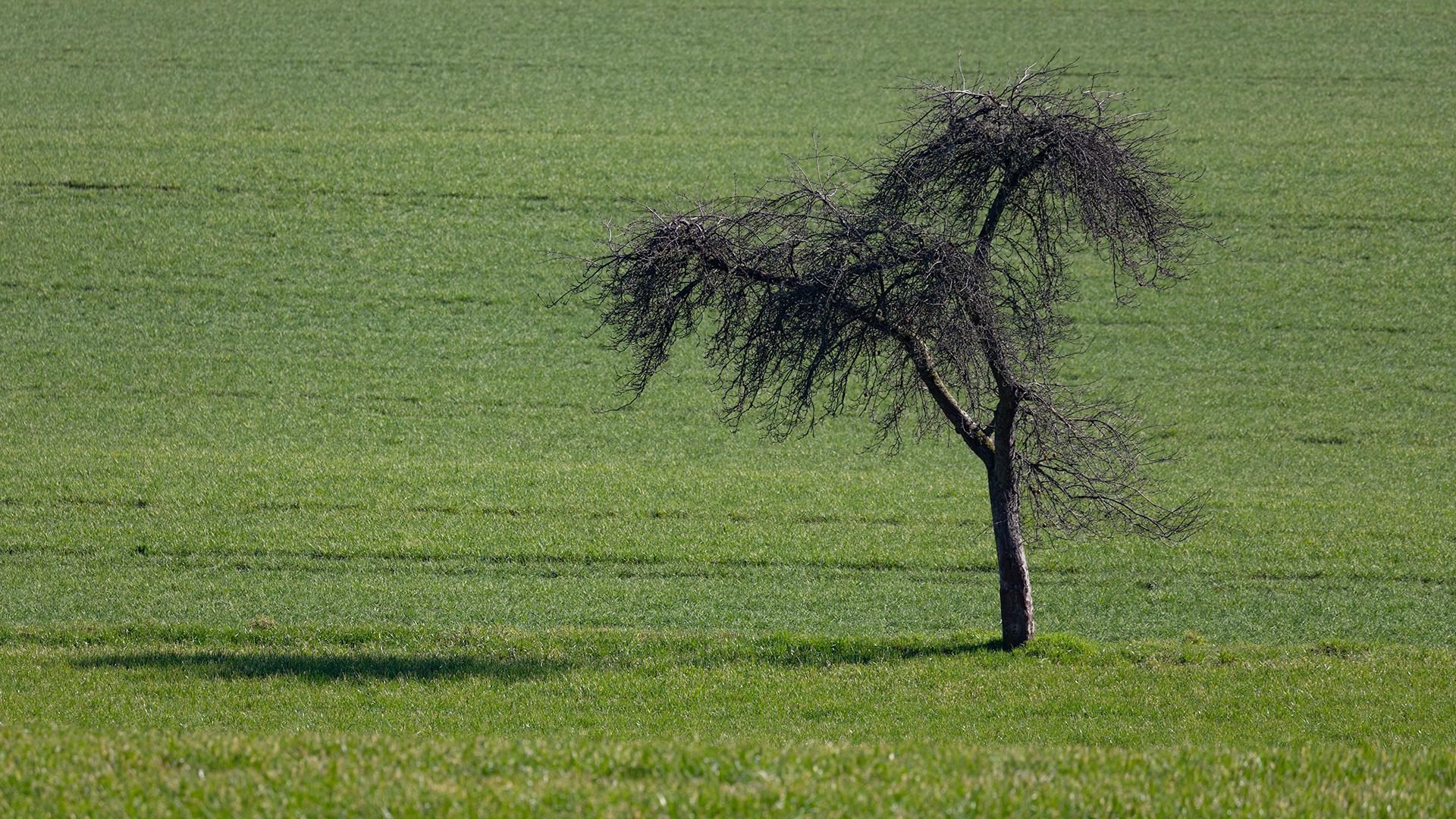 der Baum, die Wiese und der Schatten