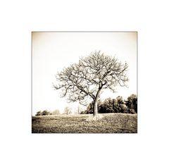 Der Baum ...