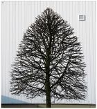 Der Baum