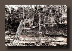 - Der Baum -