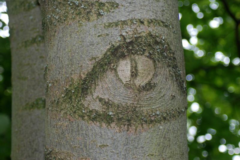der Baum hat ein Auge auf mich geworfen