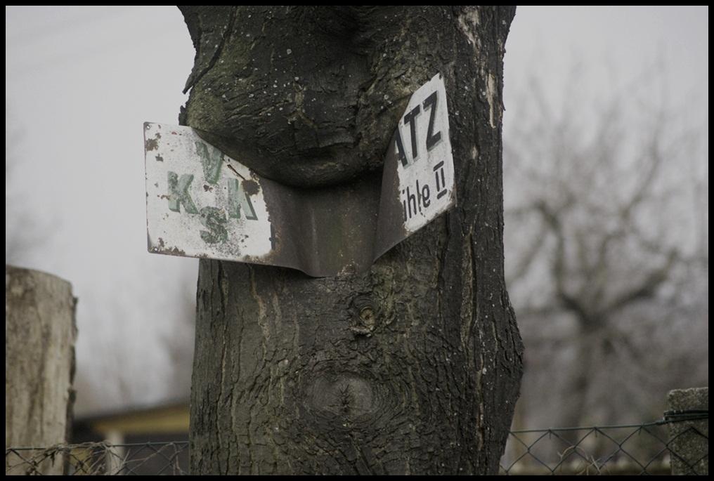 Der Baum hatte Appetit...