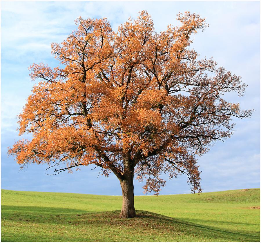 Baum Bild