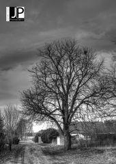 Der Baum hinterm Hof ...