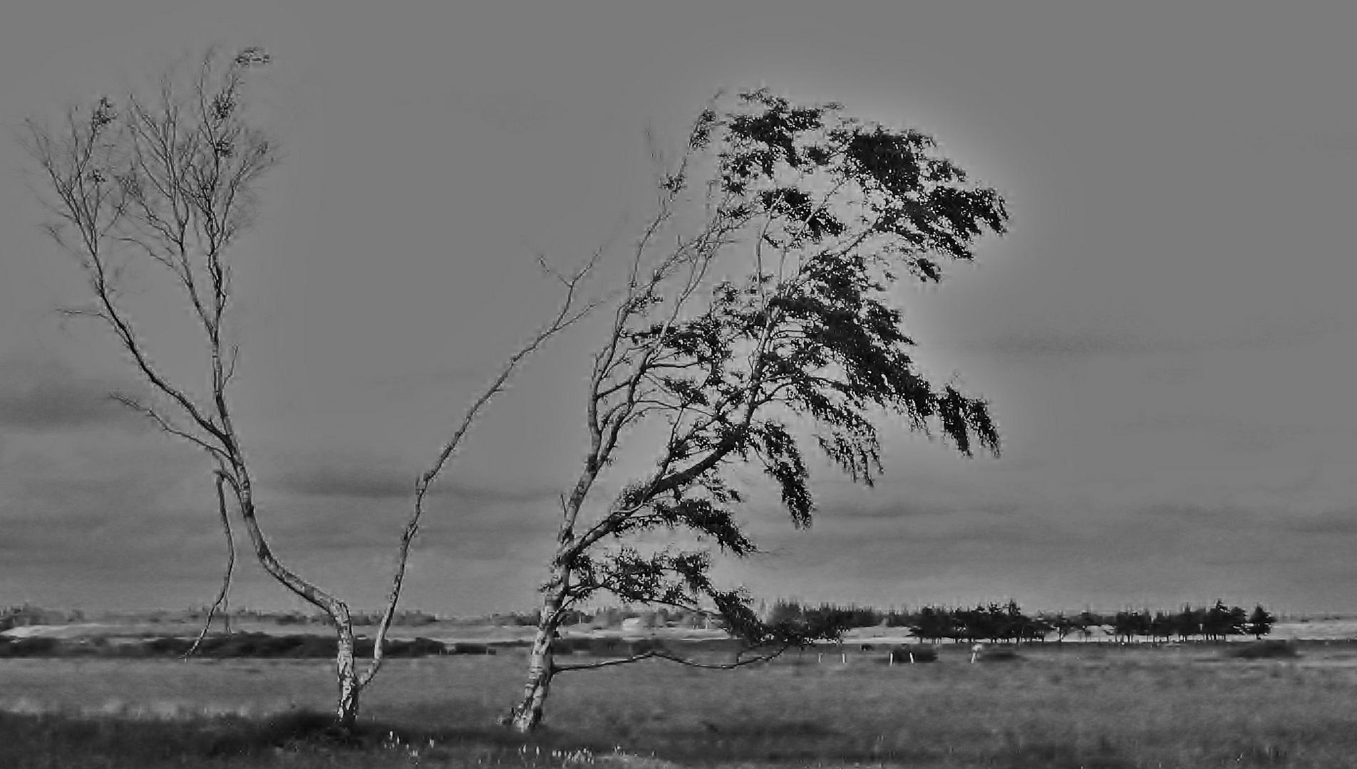 Der Baum; ich oder du?